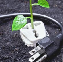 sapling growing out of a socket with plug